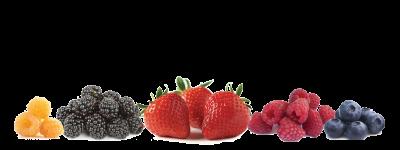 Munoz Berry Farm